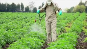 شركة رش مبيدات بحائل